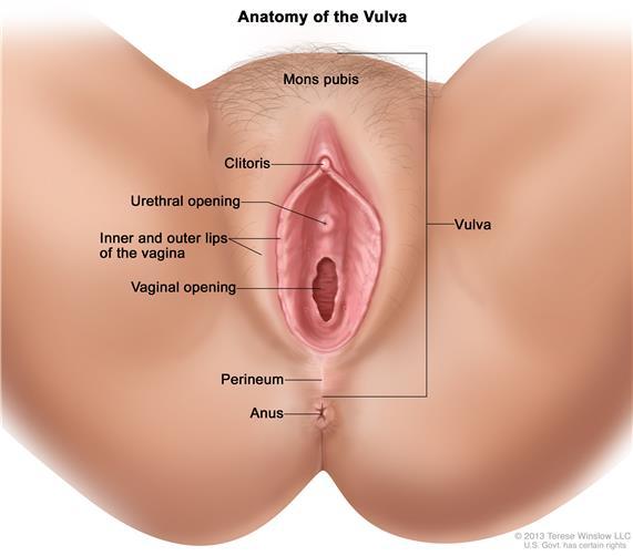Vulva -Confidentlover.com