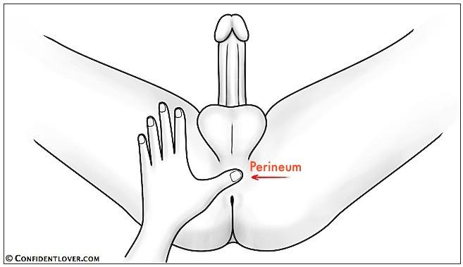 perinum-labeled