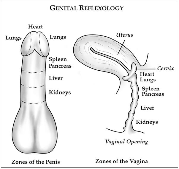 Does Size Really Matter- Genital Reflexology